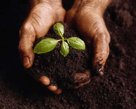 Seed origins 1